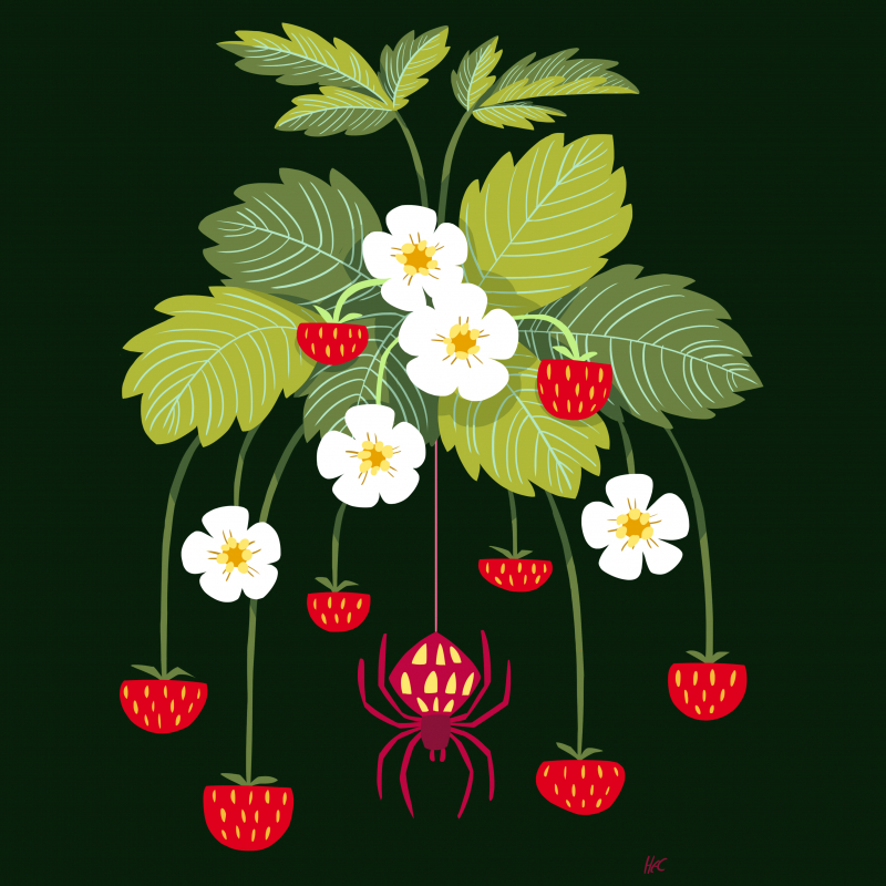 'Spider in the Strawberries' by Heather Clark